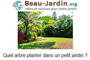 arbre à planter dans un petit jardin ?