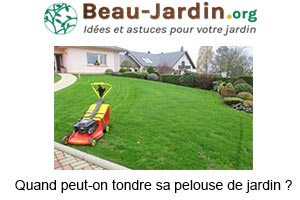 Quand peut-on tondre sa pelouse de jardin ?